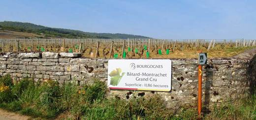 Bourgogne - Bâtard-Montrachet Grand Cru vineyard. April 2014.