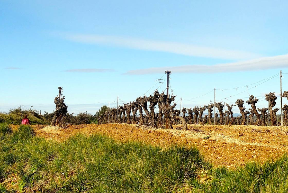 'Au pays de Picpoul' by gardiole, licensed under CC BY-ND 2.0.