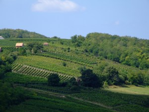 Vineyard hills of Villany by Jerzy Kociatkiewicz, licensed under CC BY-SA 2.0