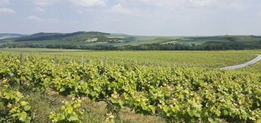 Wine Rally Champagne 2018