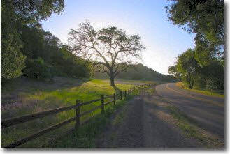 Santa Ynez Cycling tour