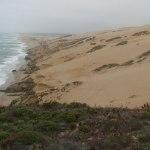 Guadalupe Dunes Beach Hike