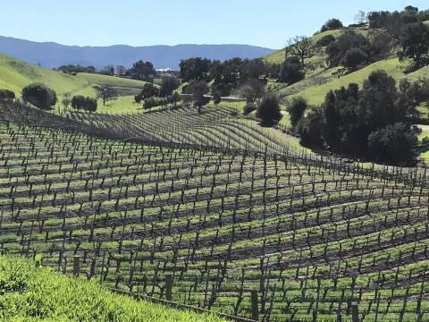 Vineyard Estate Tour