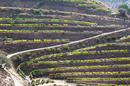 Terraced vines in Priorat