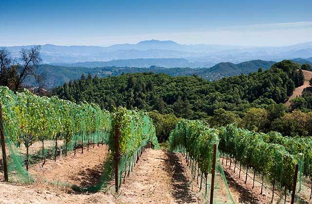 gustafson family winery