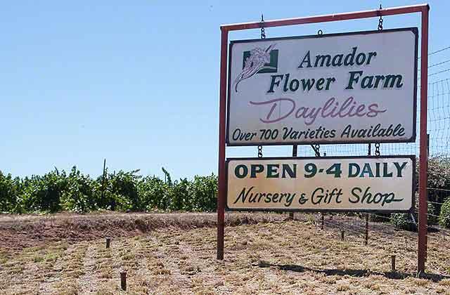 Amador flower farm
