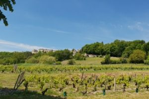 Sancerre wine tour