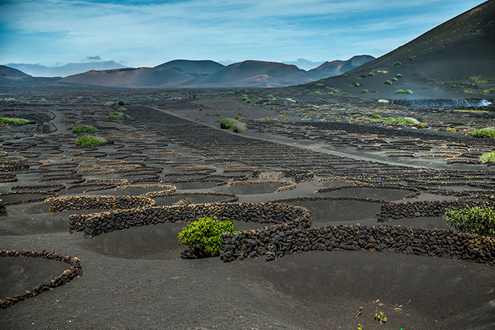 Lava walls protect vines from harsh Atlantic winds on Lanzarote, Canary Islands