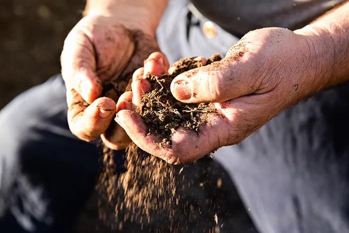 The soil at Momtazi Vineyard / Chris Low