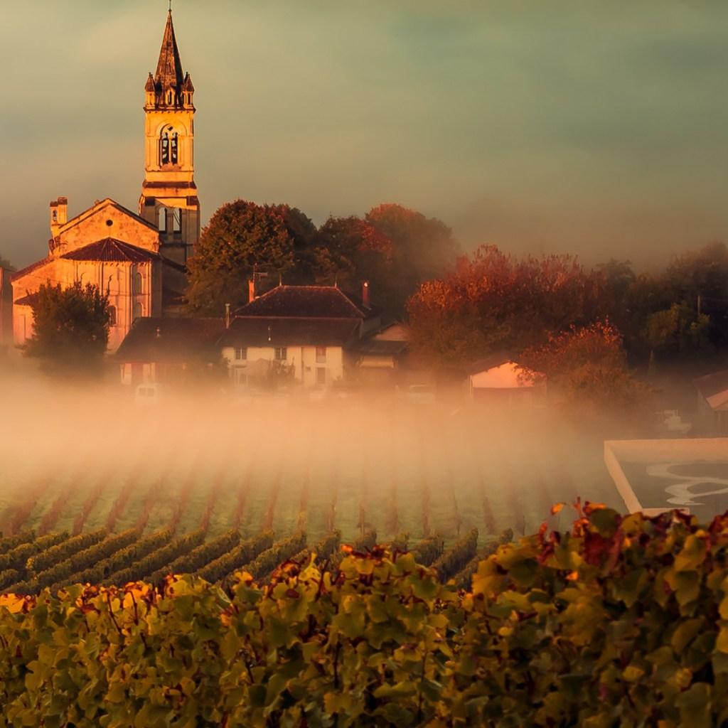 Sweet Wines of Bordeaux