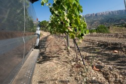 Extreme Wine Tourism in the Priorat.