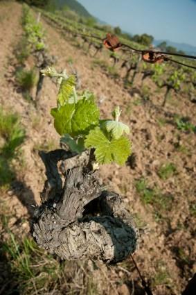 wineplease_torrensMoliner__0069
