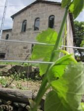 wine pleasures ribeira sacra 2
