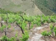 wine pleasures ribeira sacra
