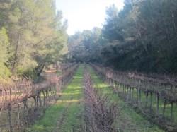 Wine Plesures visits Finca Valldosera 50 Great Cavas
