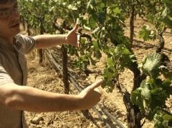 Wine Pleasures visits Albet i Noya 50 Great Cavas 2012