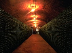 50 Great Cavas 2012 – a Wine Pleasures Visit to