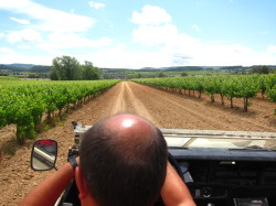 50 Great Cava wine tasting tour