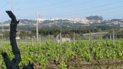 Adega de Pamela Sparkling Moscatel 50 Great Sparkling Wines of the World