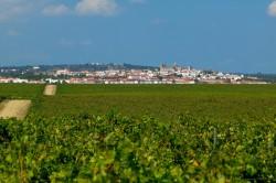 Adega Cartuxa 50 Great Sparkling Wines 2014