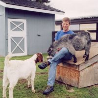 Flying Goat Cellars – Norm's Goats