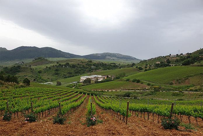 Vineyard winery Baglio di Pianetto
