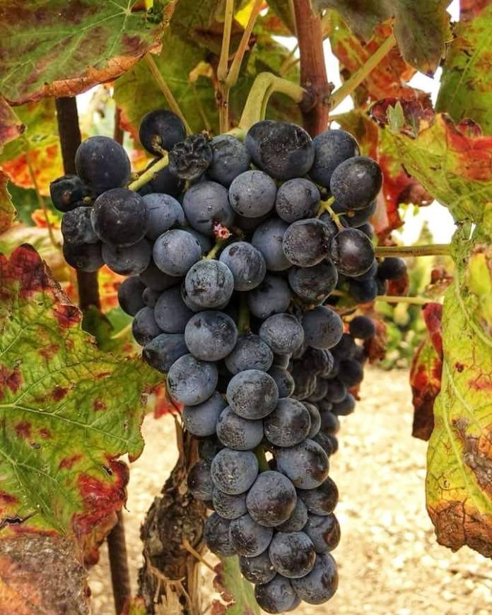 nero davola vino siciliano winerytastingsicily
