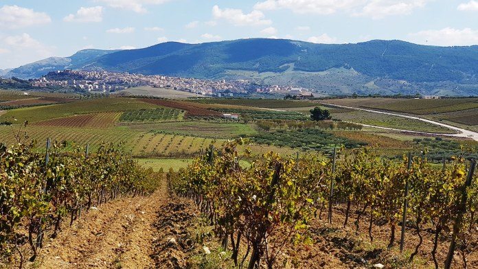 Sambuca di Sicilia Terre Sicane winerytastingsicily