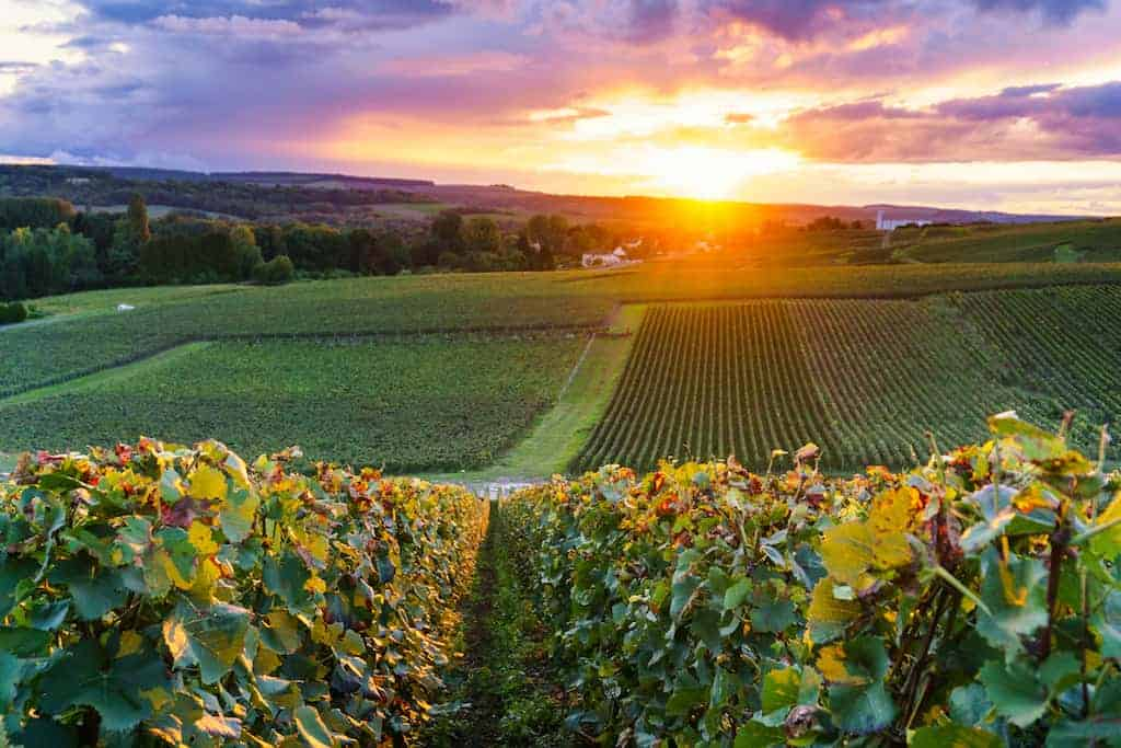 A Wine Lover's Guide to Visiting Champagne France