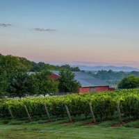 Uncorking Virginia's Wine Country • Rich History, Unique Experiences & Natural Beauty