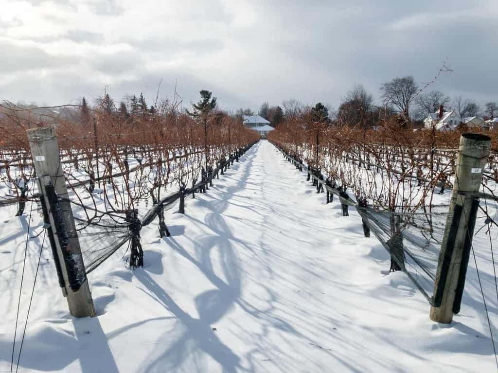 How To Explore Ontario Wine Country: Eat, Drink & Stay