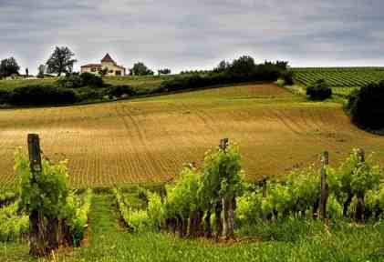 French winery in Aquitaine