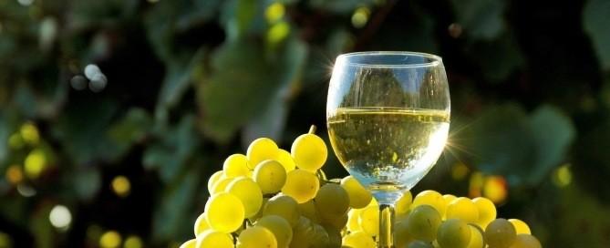 best moscato wine