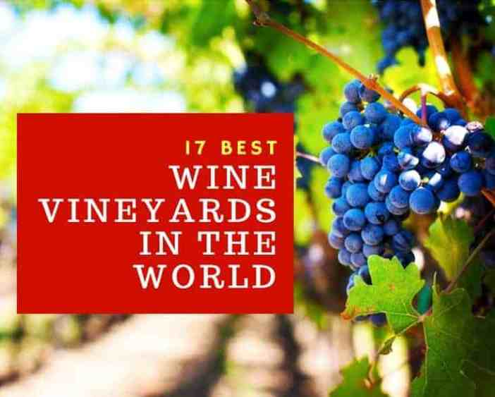 17 Best Wine Vineyards In The World