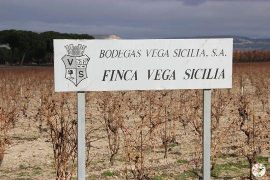 Wine Up en Vega Sicilia IMG_3028