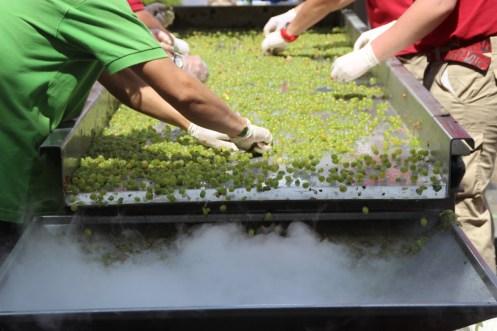 wineup mesa selección granos uva blanca