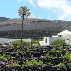 El Grifo - Lanzarote
