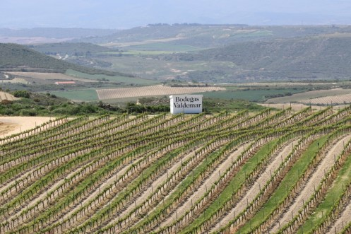 Finca Altos de Valdemar de Bodegas Valdemar (D.O.Ca. Rioja)