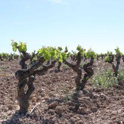 wineup IMG_6586