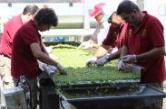 Selección manual de uva blanca en Bodegas Verum