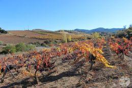 wineup IMG_9801 CARIÑENA