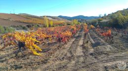 wineup 20161110_150641 CARIÑENA