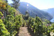 wine up IMG_2845