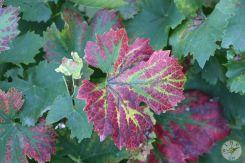 wineup IMG_2683