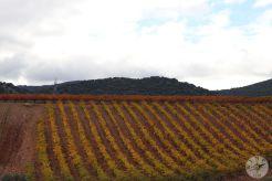 wineup IMG_3918