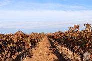 wineup IMG_4202