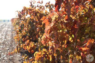 wineup IMG_4299