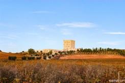 Viñedos y Bodega Pago de Cirsus en Ablitas - Navarra