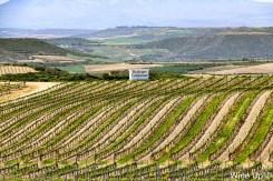 Viñedos de Bodegas Valdemar en La Rioja