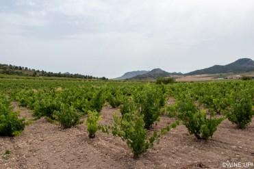 wineup IMG_1807 ok